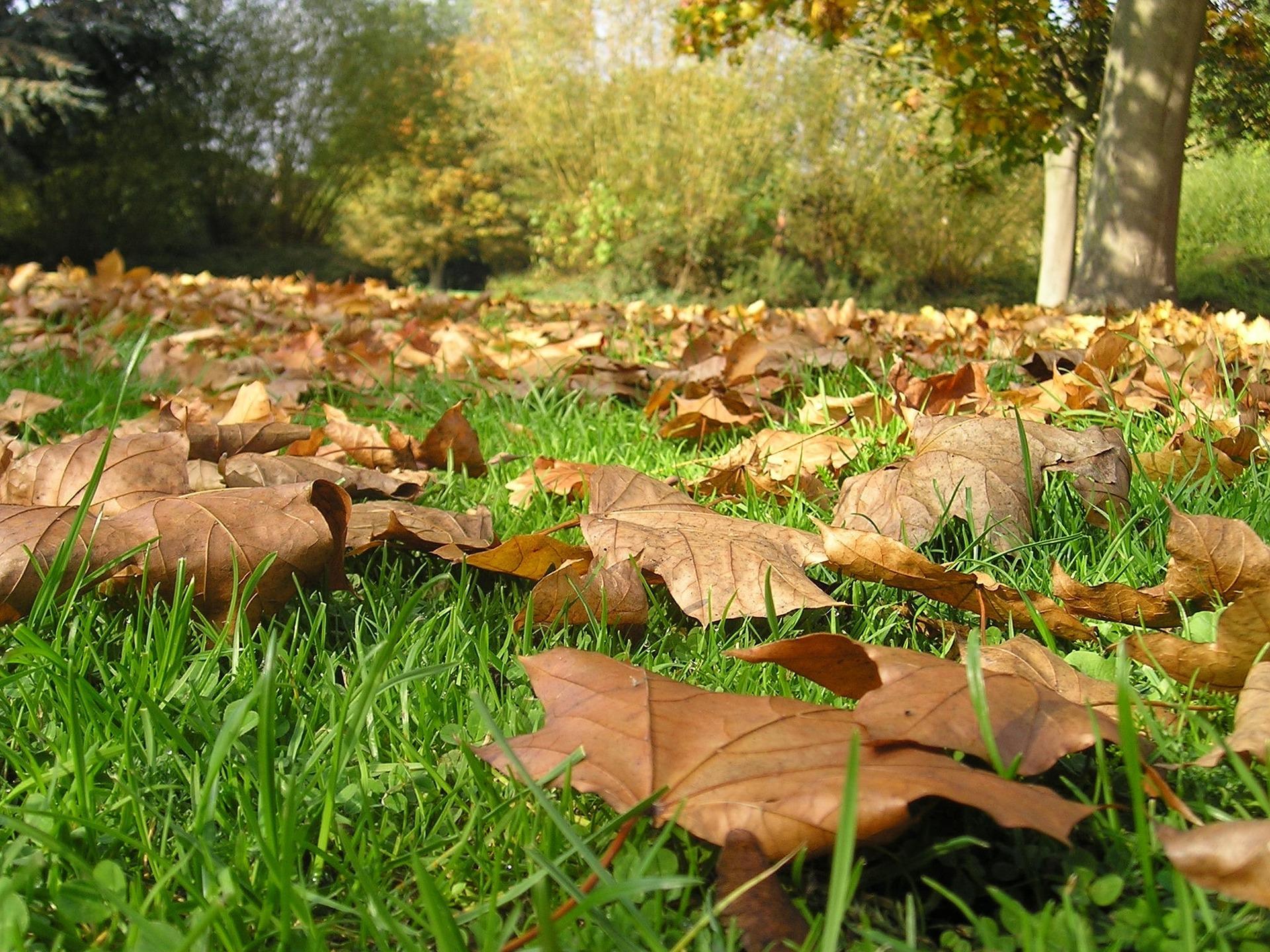 Cet automne, on composte